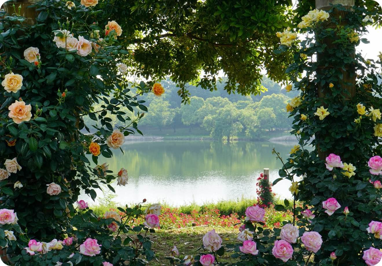 泉州に息づく大阪の自然と歴史 蜻蛉池公園